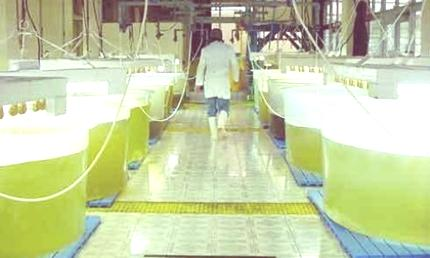 biodiesel-de-algas